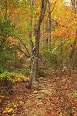 Pinhoti Trail, Cheaha Wilderness, Talladega National Forest, Delta, Alabama, USA