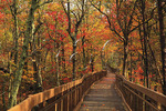 Bald Rock Trail Boardwalk, Cheaha State Park, Delta, Alabama, USA