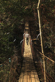 Hiker on Cane Creek Swinging Bridge, Woodland Trail, Fall Creek Falls State Resort Park, Pikeville, Tennessee, USA