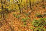 Jarman Gap, Appalachian Trail, Shenandoah National Park, Virginia, USA