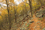 Massanutten Mountain Trail, Massanutten Mountain, Shenandoah Valley, Virginia, USA