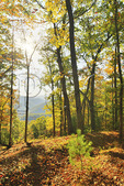 Breastworks along Confederate Breastworks Interpretive Trail, Shenandoah Mountain, West Augusta, Virginia, USA