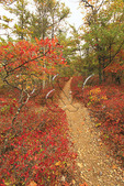 Turk Mountain, Appalachian Trail, Shenandoah National Park, Virginia, USA