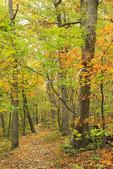 Gap Creek Trail, Massanutten Mountain, New Market, Shenandoah Valley, Virginia, USA