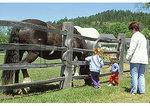 Billings Farm & Museum, Woodstock, Vermont