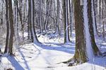 Near Hightop, Appalachian Trail, Shenandoah National Park, Virginia, USA