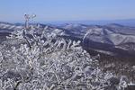 On Hightop, Appalachian Trail, Shenandoah National Park, Virginia, USA