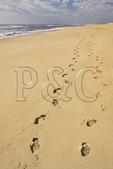 Footprints on the beach, Cape Hatteras National Seashore, Outer Banks, Buxton, North Carolina, USA