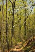 Signal Knob Trail, Massanutten Mountain, Waterlick, Shenandoah Valley, Virginia, USA