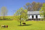 Farm Near Winchester, Opequon, Shenandoah Valley, Virginia, USA