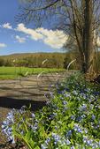 Blue Bells, Fort Valley, Seven Fountains, Shenandoah Valley, Virginia, USA