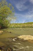 Receeding Floodwaters, Shenandoah River, Shenandoah River State Park, Front Royal, Virginia, USA