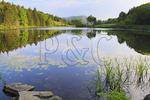 Morning, Little Long Pond, Little Long Pond Loop Carriage Road, Acadia National Park, Mount Desert Island, Maine, USA