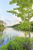 Dusk on Eagle Lake Loop Carriage Road, Eagle Lake, Acadia National Park, Maine, USA