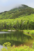 Beaver Pond, Appalachain Trail, Lincoln, New Hampshire, USA