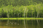 Wiley House Pond, Crawford Notch, North Conway, White Mountains, New Hampshire, USA