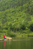 Feeding Ducks at Wiley House Pond, Crawford Notch, North Conway, White Mountains, New Hampshire, USA