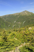 Great Gulf Wilderness, Chandler Brook Trail and Great Gulf Trail with Appalachian Trail and Mount Adams in Distance, White Mountains, New Hampshire, USA