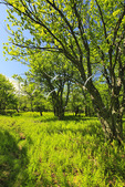 Hidden PassageTrail, Flat Rock and Roaring Plains, Dolly Sods, Dry Creek, West Virginia, USA