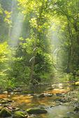 Jeremy's Run, Neighbor Mountain and Knob Mountain Trail, Shenandoah National Park, Virginia, USA