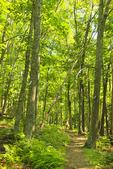 Jeremy's Run Trail, Shenandoah National Park, Virginia, USA