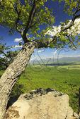 Story Book Trail, Massanutten Mountain, Shenandoah Valley, Virginia, USA