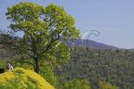 Overlook North of Rt 211, Shenandoah National Park, Virginia, USA