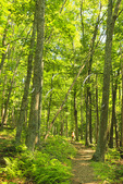 Jeremy;s Run Trail, Shenandoah National Park, Virginia, USA