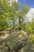 View of Shenandoah Valley From Signal Knob, Signal Knob Trail, Massanutten Mountain, Shenandoah Valley, Virginia, USA