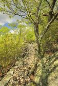 Signal Knob Trail, Massanutten Mountain, Shenandoah Valley, Virginia, USA