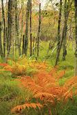 Jessup Trail, Wild Gardens of Acadia, Acadia National Park, Maine, USA