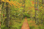 Jessup Trail, Wild Gardens of Acadia, Acadia National Park, Maine, USA