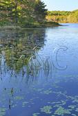 Witch Hole Pond, Acadia National Park, Maine, USA