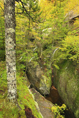 Moose Cave Gorge, Bear River, Grafton Notch State Park, Newry, White Mountains, Maine, USA