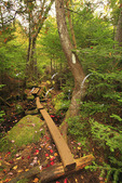 Appalachian Trail Near Daicey Pond, Baxter State Park, Millinocket, Maine, USA