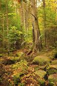 Katahdin Stream Trail, Appalachian Trail, Baxter State Park, Millinocket, Maine, USA