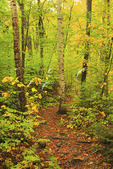 Appalachian Trail, Old Spec Trail, Grafton Notch State Park, Newry, White Mountains, Maine, USA