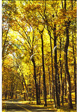Main Road, Catoctin Mountain Park, Thurmont, Maryland