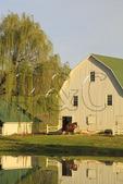Horse Warming in Sunrise Sun on farm near Middlebrook in Shenandoah Valley, Virginia, USA