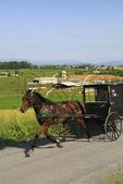 Mennonite buggies on road near Dayton in Shenandoah Valley, Virginia, USA