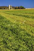 Hay field on farm near Dayton in the Shenandoah Valley, Virginia, USA