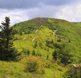 Along Appalachian Trail in Engine Gap, Look at Jane Bald, Roan Mountain, Carver's Gap, Tennessee / North Carolina, USA