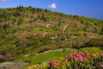 Grassy Ridge, Roan Mountain, Tennessee / North Carolina, USA