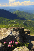 View From Grassy Ridge, Roan Mountain, Tennessee / North Carolina, USA