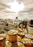 Loading Blue Crabs in baskets on dock, Rock Hall, Maryland