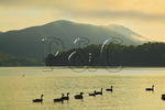 Geese at Sunrise Beside  Appalachian Trail, Shook Branch Recreation Area, Watauga Lake, Hampton, Tennessee, USA