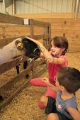 Meeting Sheep, Rockingham County Fair, Harrisonburg, Shenandoah Valley, Virginia, USA
