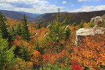 View of Red Creek Canyon from Rohrbaugh Trail, Dolly Sods Wilderness, Hopeville, West Virginia, USA