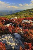 Bear Rocks Preserve, Dolly Sods Wilderness, Hopeville, West Virginia, USA