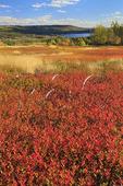 Blueberry Bald, Appleton, Maine, USA